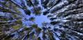 Groupement forestier d'investissement: France Valley lance le premier fonds