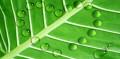 Obligations vertes: Axa IM table sur une année record