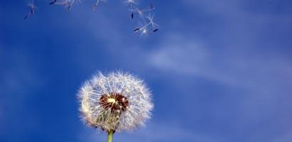Des vents porteurs pour l'épargne salariale