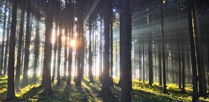 Forte activité sur le marché des forêts en 2014