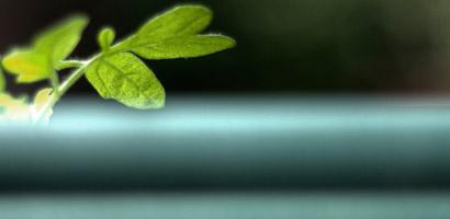 """Le groupe Aviva dévoile une stratégie """"low carbon"""""""