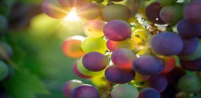 Vignobles : deux nouveaux GFV Bacchus Conseil